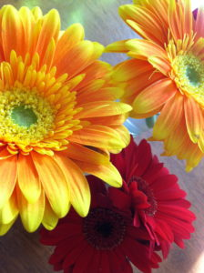 red & orange daisies