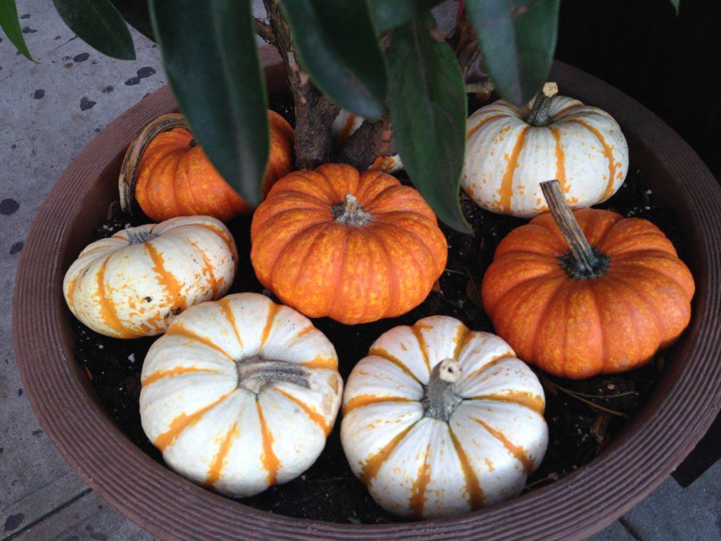 Morselicious Mini-Pumpkins